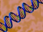 Genetic Testing for Detoxification, Immune and Neurological Risk Factors in Environmental Illness