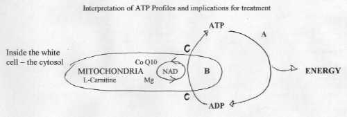 Interpretations of ATP Profiles and implications for treatment