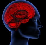 Blood-Brain Barrier Healing & Protection