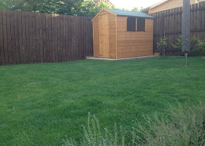 Back garden with lawn, flower beds, conifers and shed