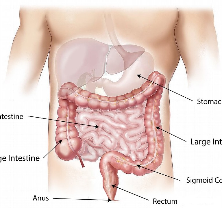Diagram of the digestive tract