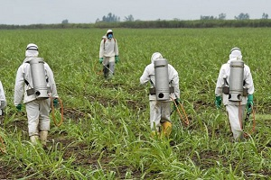 Workers in biohazard suits spray crops with toxic glyphosate