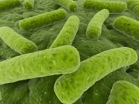 Microbes living in the human gut