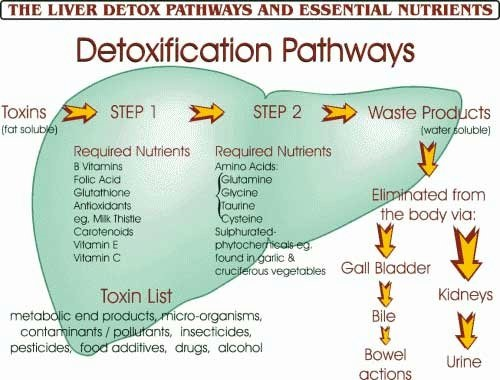 Liver detox pathways and required nutrients