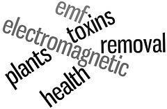 Multiple Chemical Sensitivity & Electrical Sensitivity Word Cloud