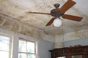 Mold growing on ceiling in a living room