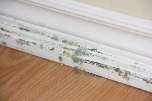 Black mold on skirting board